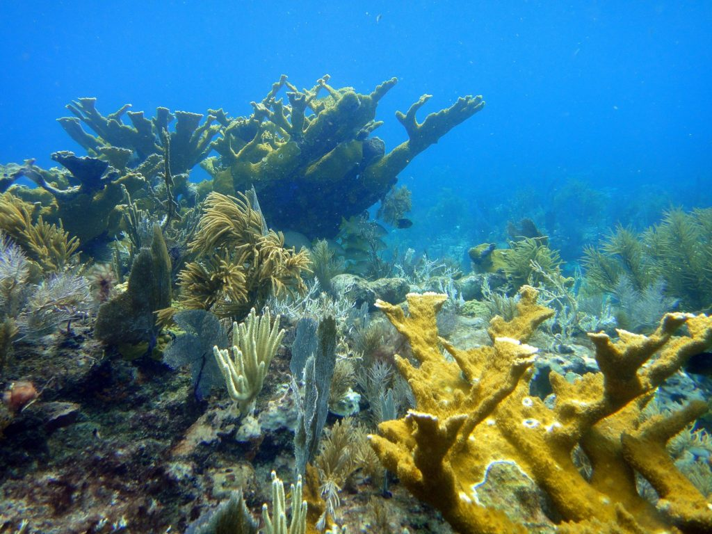 Molasses Reef Key Largo Florida